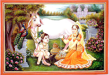 Fresh Milk for Krishna