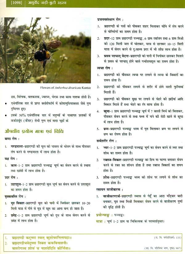 Jadi Booti Rahasya Book