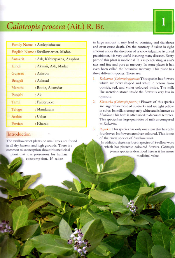 herbs augusta page