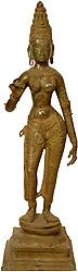 Devi: The Manifestation of Primordial Female Energy