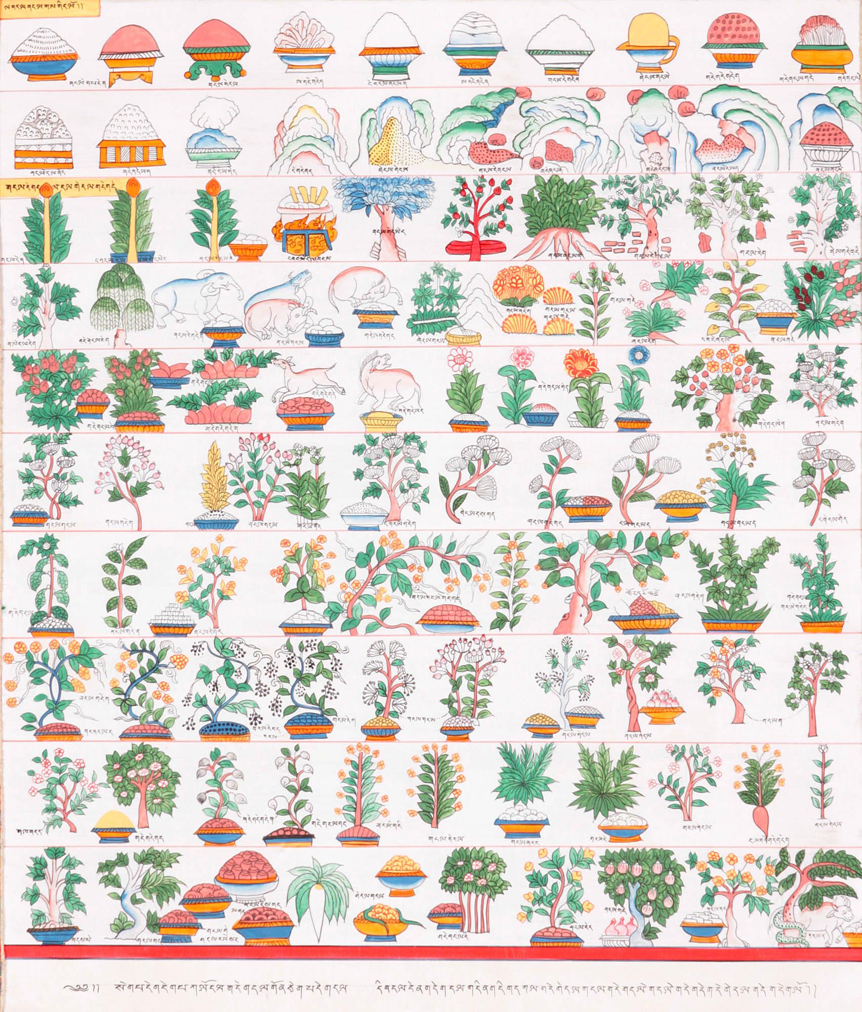 Tibetan herbs
