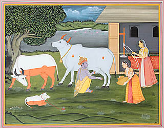Krishna Milking Cow