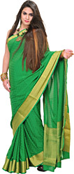 Fern-Green Handloom Sari from Bangalore with Self-Weave and Golden Border