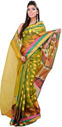 Herbal-Garden Banarasi Sari with Woven Bootis and Tri-Colored Border