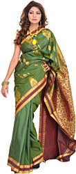 Vineyard-Green Sari from Bangalore with Woven Peacocks and Brocaded Pallu