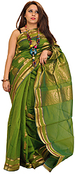 Forest-Green Sari from Banaras with Woven Paisleys in Zari Thread