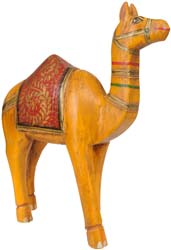 Camel from Rajasthan