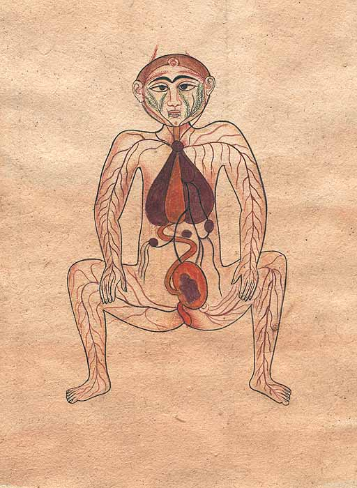 Human uterus anatomy